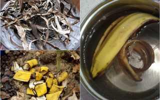 Кожура бананов для комнатных цветов: польза подкормки, рецепты приготовления удобрений и средства для борьбы с тлей