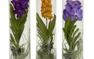 Можно ли пересаживать орхидею во время цветения – показания и правила пересадки