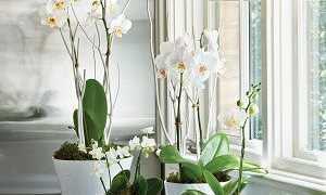 Можно ли на солнце держать орхидею, на подоконнике южного окна
