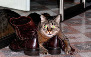 Как избавиться от запаха кошачьей мочи в обуви – эффективные методы