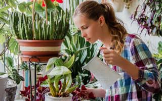 Почему растения нельзя поливать холодной водой, как поливать правильно, комнатные условия, открытый грунт