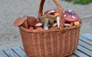 Почему при варке грибов образуется пена и что с ней делать