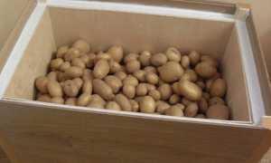 Термошкаф для хранения овощей: какой выбрать или сделать своими руками