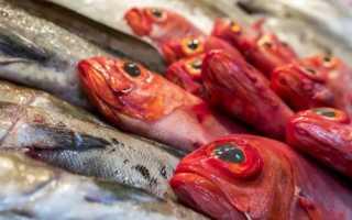Сколько хранить рыбу в холодильнике: правила, сроки и особенности