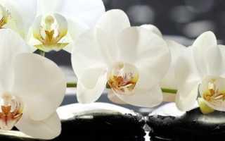 Можно ли держать орхидею дома: приметы и суеверия