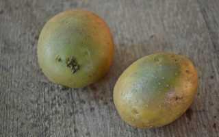 Можно ли есть зеленую картошку, если срезать бока, и чем опасна зеленая кожура для здоровья