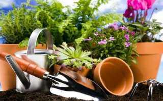 Удобрения для комнатных растений: домашние рецепты и магазинные товары