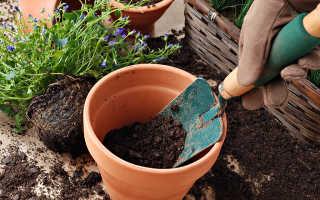 Уход, выращивание и пересадка комнатных растений
