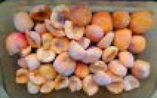 Можно ли замораживать свежие абрикосы на зиму – Мисс Чистота
