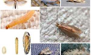 Как избавиться от моли в квартире в доме в домашних условиях: быстро определяем вид насекомых и способ борьбы