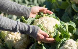 Как хранить цветную капусту: заморозка, закладка, квашение?